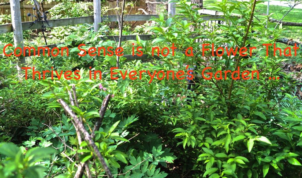 The Flowering of Common Sense