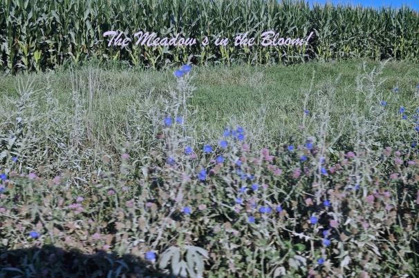 5 Blooming Meadow